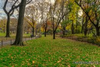 Central Park Leaves