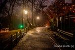 Foggy Central Park